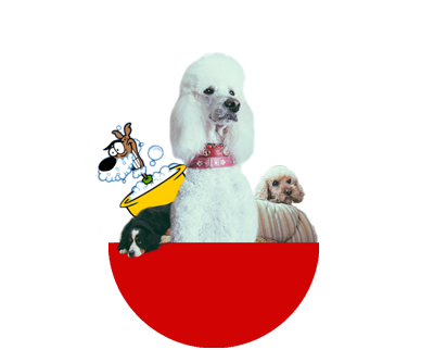 Home its still a dogs life we give your dog the treatment it deserves in an environment where it can be comfortable going above and beyond the usual grooming experience is simply solutioingenieria Choice Image